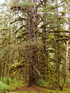 Rainforest of Southeast Alaska