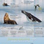 glacier-bay-national-park-animals (1)