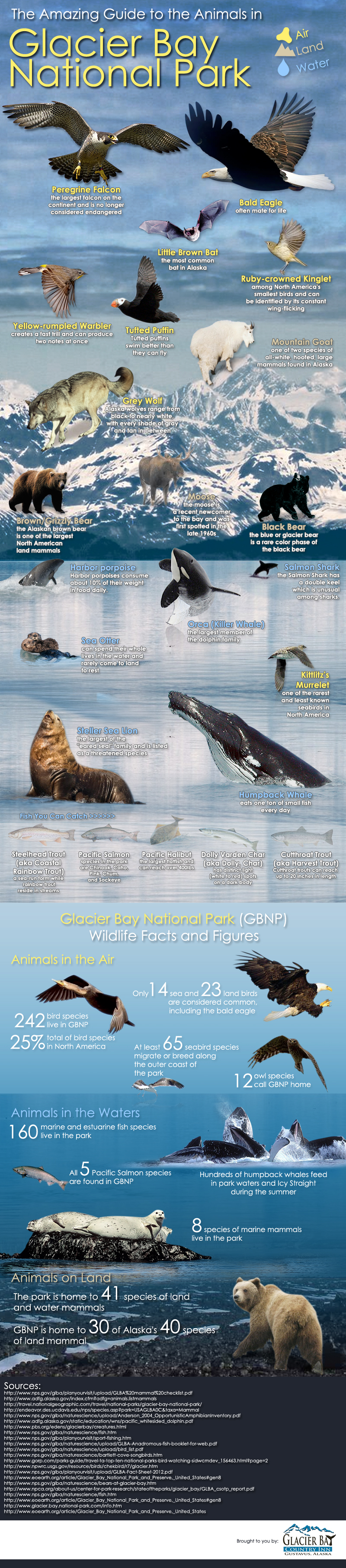 Glacier Bay National Park Animals Guide