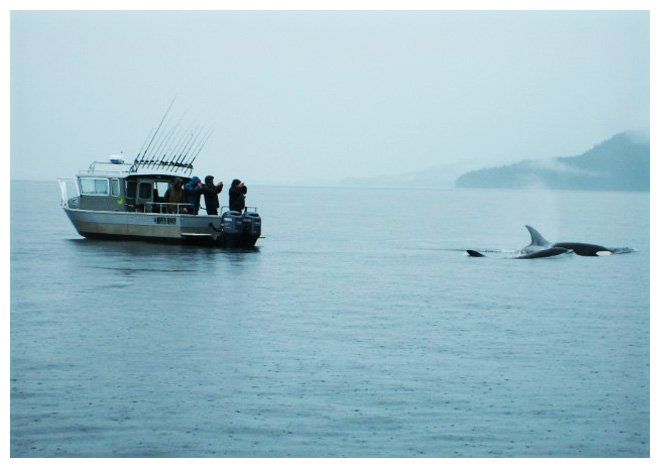 orca_next_to_boat1