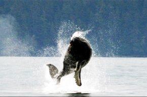 whaleoutofwater